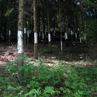 Baumstämme in einem dunklen Waldstreifen mit Alufolie umwickelt