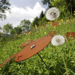 50 Sägeblätter auf Gewindestangen in einer Bergwiese